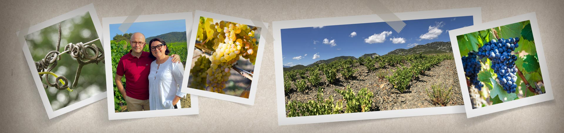 jamelles-nos-terroir-header-terroir