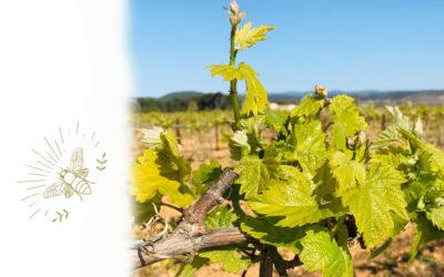 April in the vineyard
